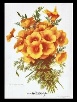 The Golden Poppy 1902 Art Nouveau California Poetry Prose Illustration Giftable